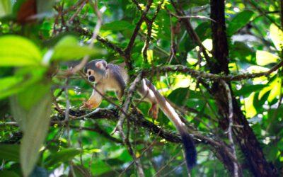 Lifestyle Ecuador: Leben im Dschungel – Teil 2