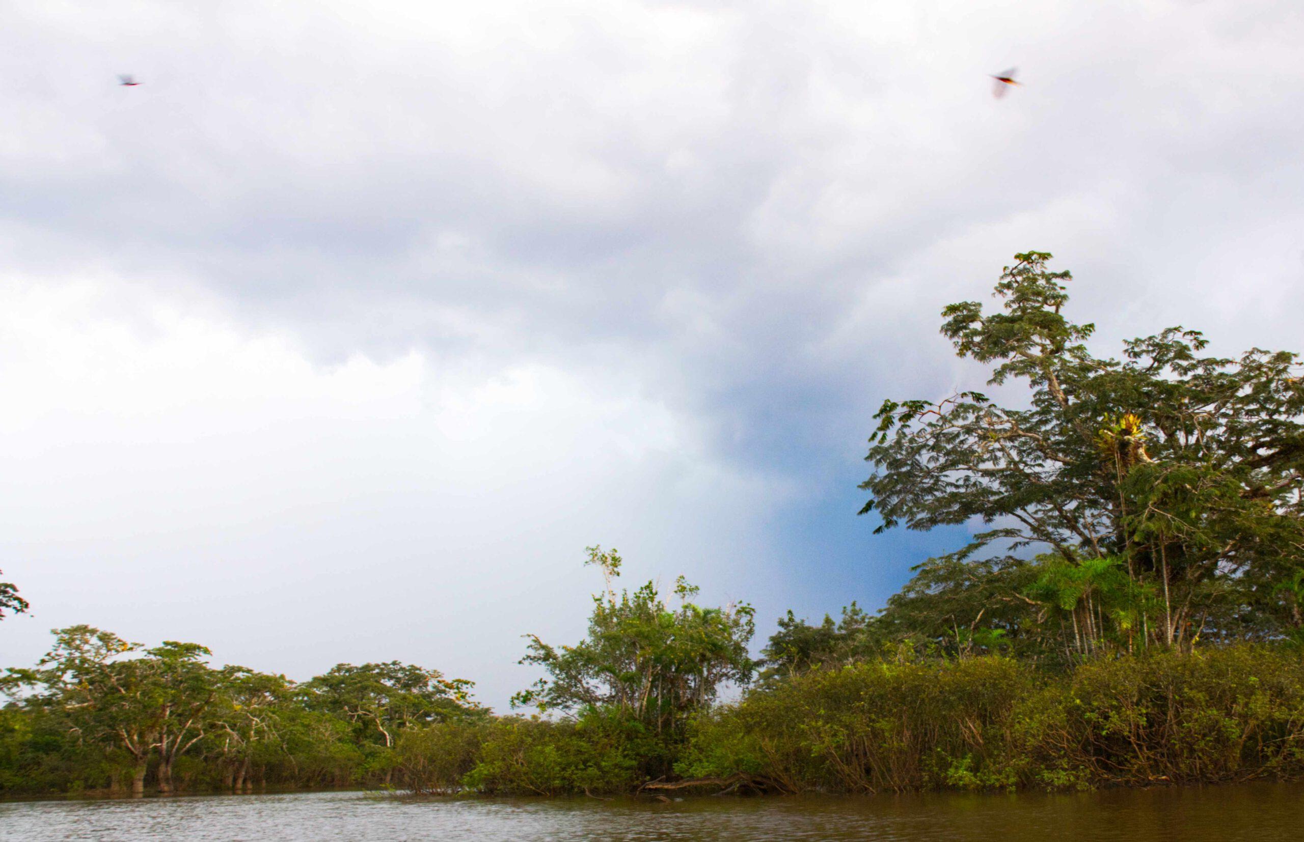 Vögel über der Lagune Cuyabeno Ecuador